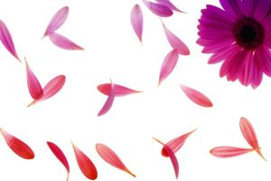 Use original flower petals